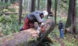 Cedar Planks 001a.jpg