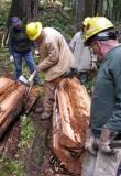 Cedar Planks 002b.jpg
