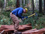 Cedar Planks 009i.jpg