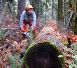 Cedar Planks 010j.jpg