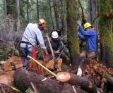 Cedar Planks 012l.jpg