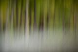 Voile sur la forêt