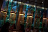 Bamboo Lamp Shades and High Tea
