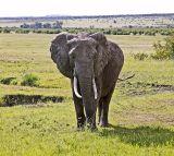 Welcome to Masai Mara