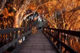 Olive Seymour Boardwalk