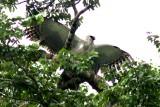 More birds Brazil 2012