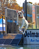 Delmarva Dock Dogs