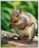 Squirrel_D2X_0808.jpg