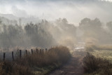 painted mist