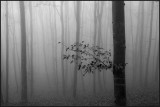 sleeping forest 2