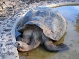 2005 Galapagos eilanden/Galapagos Islands