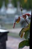 Canon135mm f/2.8 soft focus lens