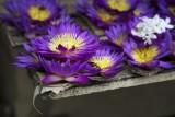 Purple offerings