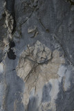 Termessos december 2012 7228.jpg