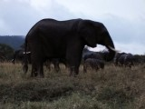 Elephants at Serengeti Camp
