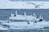 Kelp gulls2.jpg