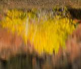 Autumn Relflections