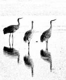 Sabdhill Crane Family
