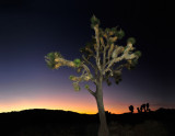 After Sunset at Joshua