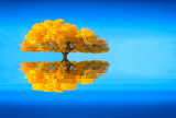 Golden Illusion