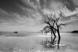 Salton Sea's Stark Beauty