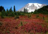 75 fall meadows