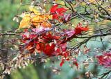 Impressions of Fall