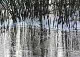61 snake lake willows