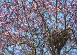 18 plum blossom nest