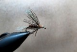 The Flymph