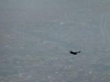 Bird of prey over Bogotá