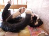 Kitten acting silly