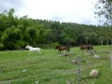 Salento countryside, walk from coffee finca