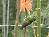 Valle de Cocora hike - hummingbird