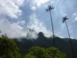 Valle de Cocora hike