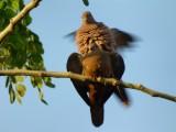 Dove love in Cartagena