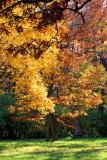 Morton Arboretum, Lisle, IL - fall colors 2012