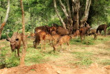 Deer, Bannerghatta National Park, Karnataka