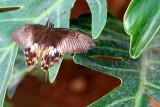 Butterfly Park, Bannerghatta National Park, Karnataka
