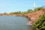 Washington Monument, Cherry Blossoms, Tidal Basin, Washington D.C.