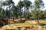 Forest near Sehrmandi
