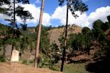Forest Sehnsa-Sarsawa road