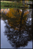 Autum colors in water - Huseby Bruk