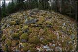 Lots of stone in Småland - Sirkön Åsnen