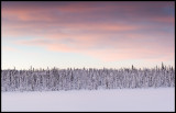 Snowy forest near Svappavaara (Panorama 4 pictures) Lapland / Sweden