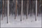 Frozen forest at the arctic circle - Sweden