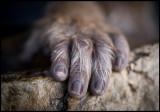 A primates hand....