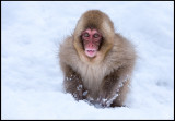 Young animal with winter fur