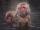 Makas like to take a bath