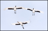 Flying Snow Cranes